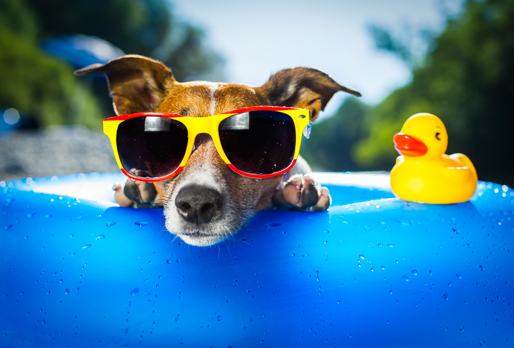Games to play with your dog this summer