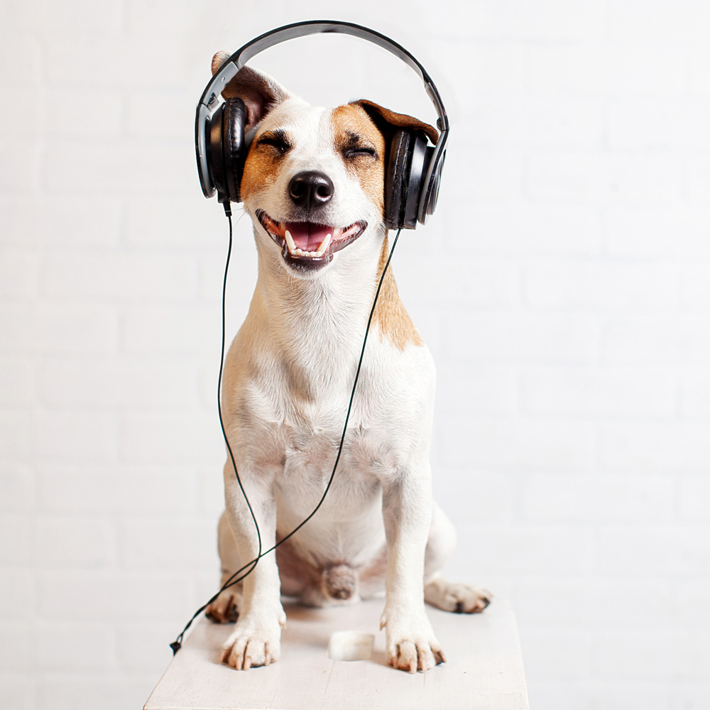Great Podcasts for Dog Owners