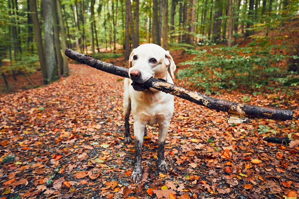 How to Keep your Dog Safe this Autumn
