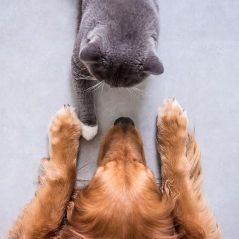 dog and cat meeting