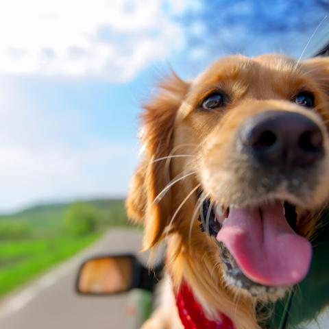 Best UK destinations for your dog's holiday